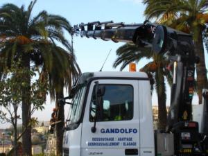 abattage de palmier avec charançon rouge 06,83