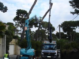 Élagage en hauteur et abattage d'un pin maritime à Antibes