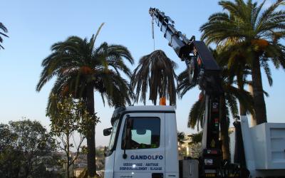Abattage de palmier