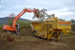 Broyage de souches, palmiers et déchets végétaux