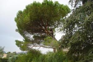 Élagage d'un arbre en bord de route avec nacelle près de Nice