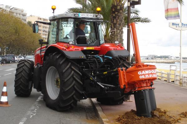 Dessouchage par carottage de palmiers à Cannes
