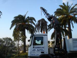 Location avec chauffeur de camion grue 8x4et 6x4 pour abattage de palmier ou autre